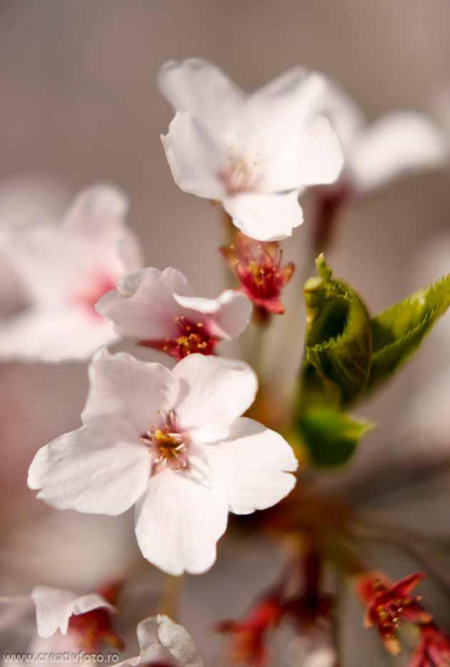 Flori de m